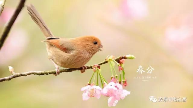 【二十四节气中医养生】– 春分(2020年3月20日)